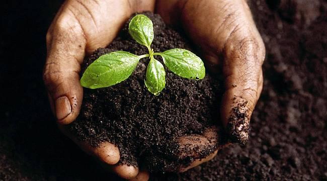 Tohum, Ülkenin bağımsızlığıdır