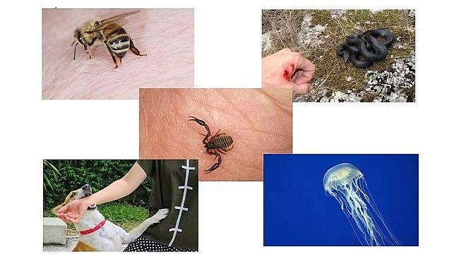 Arı – akrep – yılan sokmasında ne yapılmalı?